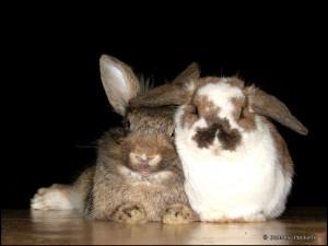 The_happy_couple