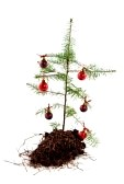 5919778-christmas-recession-with-a-poor-nature-tree